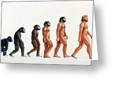 Human Evolution Greeting Card by David Gifford