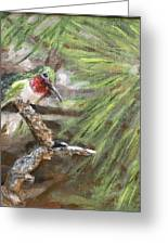 Hummer On A Limb Greeting Card by Lorrie T Dunks