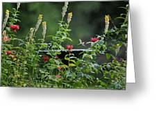 Humming Bird Greeting Card by Bill  Wakeley