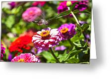 Hummingbird Flight Greeting Card by Garry Gay