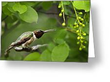 Hummingbird Hiding In Tree Greeting Card by Christina Rollo