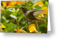Hummingbird Looking For Food Greeting Card by Heiko Koehrer-Wagner