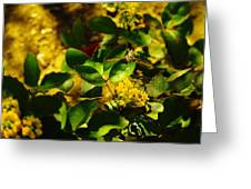 Hummingbird Moth Greeting Card by Jeff  Swan