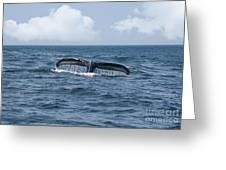 Humpback Whale Fin Greeting Card by Juli Scalzi