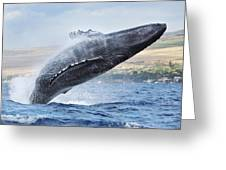 Humpback Whale Greeting Card by M Swiet Productions