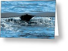 Humpback Whale Tail Off Bermuda Greeting Card by Jeff at JSJ Photography
