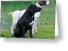 Hunting Dogs 1 Greeting Card by Rachel Munoz Striggow