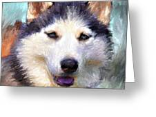 Huskies Greeting Card by Yury Malkov