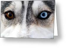 Husky Eyes Greeting Card by Keith Allen