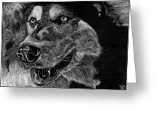 Husky Greeting Card by Lauren Alexandra