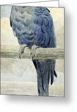 Hyacinthine Macaw Greeting Card by Henry Stacey Marks
