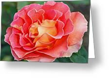 Hybrid Tea Rose  Greeting Card by Lisa  Phillips