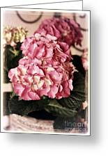 Hydrangea On The Veranda Greeting Card by Carol Groenen
