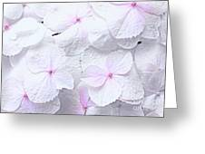Hydrangea White And Pink Greeting Card by Charline Xia