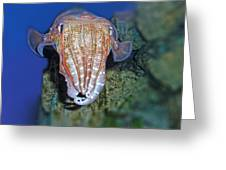 I Am An Octopus Greeting Card by TN Fairey