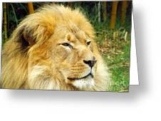 I Am King Greeting Card by Clare Bevan