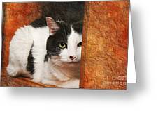 I Have My Eye On You Greeting Card by Andee Design