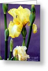 I Only Have Iris For You Greeting Card by Kathy  White