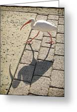 Ibis Greeting Card by Jeanette Charlebois