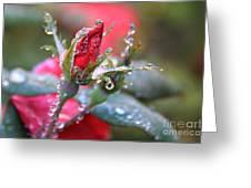 Ice Roses Greeting Card by Leslie Kirk