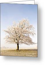 Iced Tree Greeting Card by Anne Gilbert