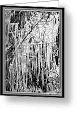 Icicles In Black And White Greeting Card by Carol Groenen