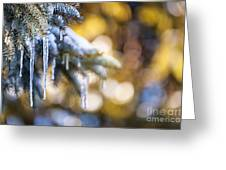 Icicles On Fir Tree In Winter Greeting Card by Elena Elisseeva