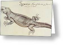 Iguana Greeting Card by John White