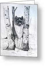 Ihasa In The Woods Greeting Card by Joette Snyder