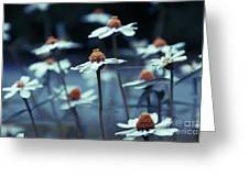 Imagine F03a Greeting Card by Variance Collections