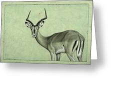 Impala Greeting Card by James W Johnson