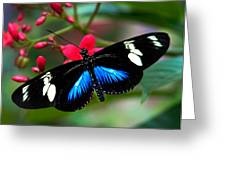 Imperfect Beauty In Black And Blue On Red Greeting Card by Karen Stephenson