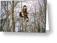 In Flight Greeting Card by David Porteus