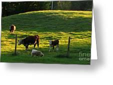 In the Field Greeting Card by Randi Shenkman