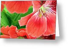 In The Garden. Geranium Greeting Card by Ben and Raisa Gertsberg