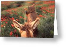 In The Poppy Fields Greeting Card by Rolf Ashby