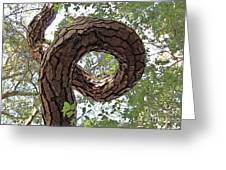 In The Spiral Of Life Always Reach For The Sky Greeting Card by Kenny Sampson