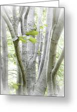 In The Woods Greeting Card by Julie Palencia