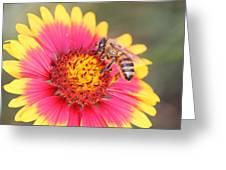 Indian Blanket Aka Firewheel And Bee Greeting Card by Lorri Crossno