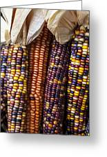 Indian Corn Close Up Greeting Card by Garry Gay