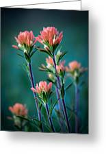 Indian Paintbrush At Dawn Greeting Card by James Barber