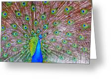 Indian Peacock Greeting Card by Deena Stoddard