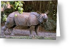 Indian Rhinoceros Greeting Card by Mark Newman