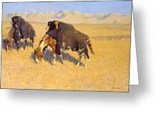 Indians Simulating Buffalo Greeting Card by Fredrick Remington