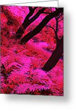 Infrared Fern Garden Greeting Card by Bill Caldwell -        ABeautifulSky Photography