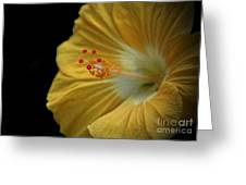 Invitation To Beauty Hibiscus Flower  Greeting Card by Inspired Nature Photography Fine Art Photography
