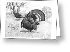 Iowa Gobbler Greeting Card by Cody Thorne
