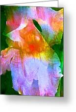Iris 53 Greeting Card by Pamela Cooper