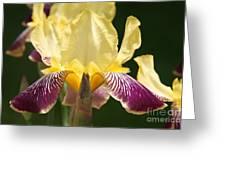 Iris Greeting Card by Jolanta Anna Karolska