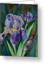 Irises Greeting Card by Barbara Carswell
